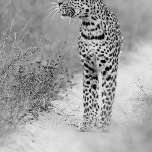 Photographic Safaris – Zimanga