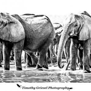 Pangolin Photographic Safaris